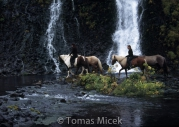Iceland_Horses_155