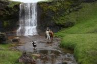 Iceland_Horses_156
