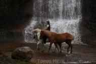 Iceland_Horses_157