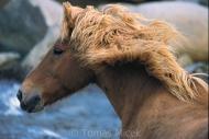 Iceland_Horses_160