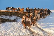 Iceland_Horses_188