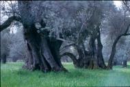 Olives_001