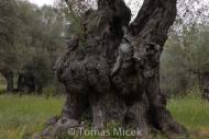 Olives_034