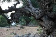 Olives_045