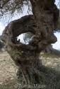Olives_046