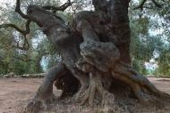 Olives_055