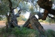 Olives_056