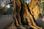 Olives_059