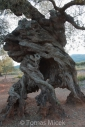 Olives_062
