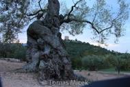 Olives_063