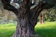 Olives_066
