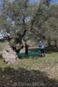 Olives_069