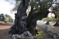 Olives_101