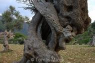 Olives_106
