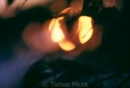 TM_SUN_035