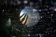TM_SUN_038