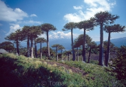 Trees_World_078
