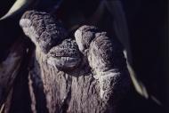 BAOBABY MADAGASKARWELWITSCHIA MIRABILIS NAMIBIA19004004.jpg